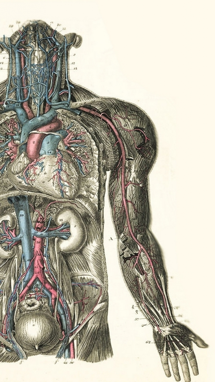 anatomy wallpapers 49 wallpapers � hd wallpapers