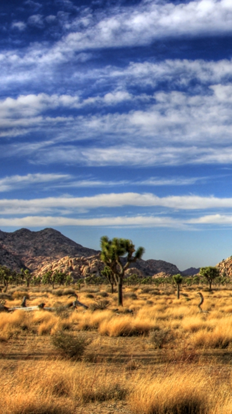 Earth Joshua Tree National Park 750x1334 Wallpaper Id 233835 Mobile Abyss
