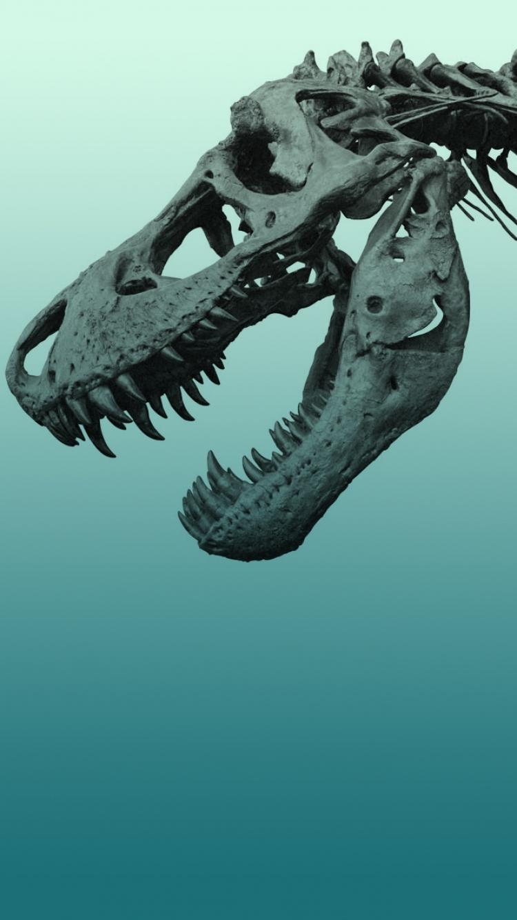 dinosaur phone wallpaper -#main