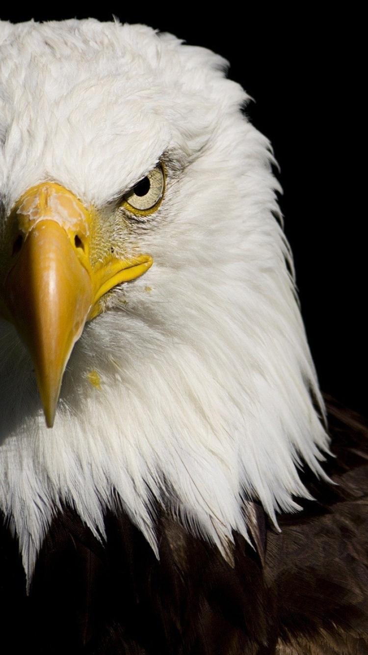 bald eagle wallpaper iphone