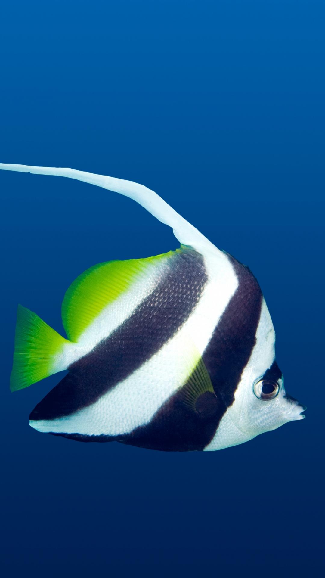 Wonderful Wallpaper Mobile Fish - 594986  Graphic_42398.jpg