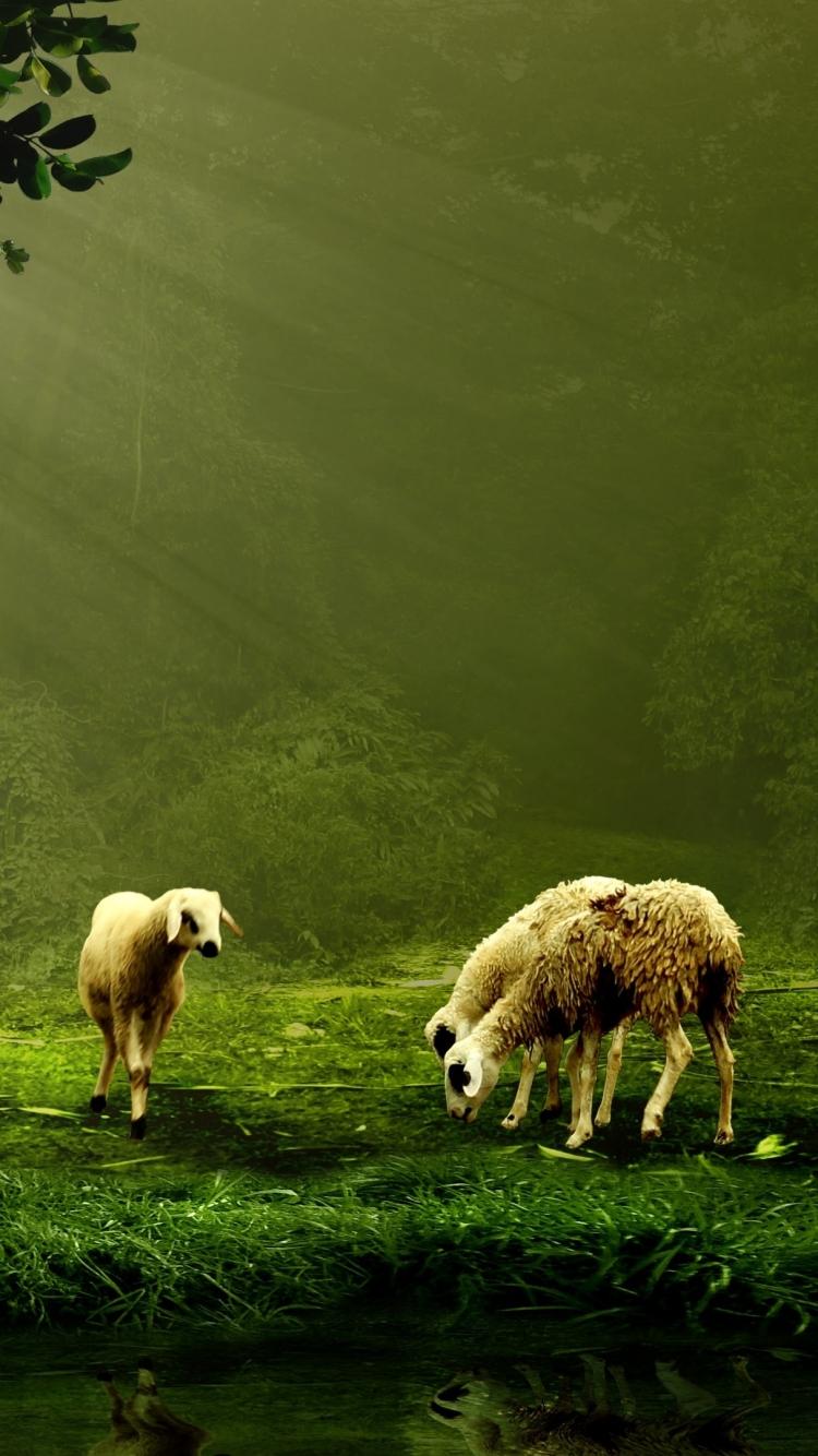 Animal Sheep 750x1334 Wallpaper ID 601514