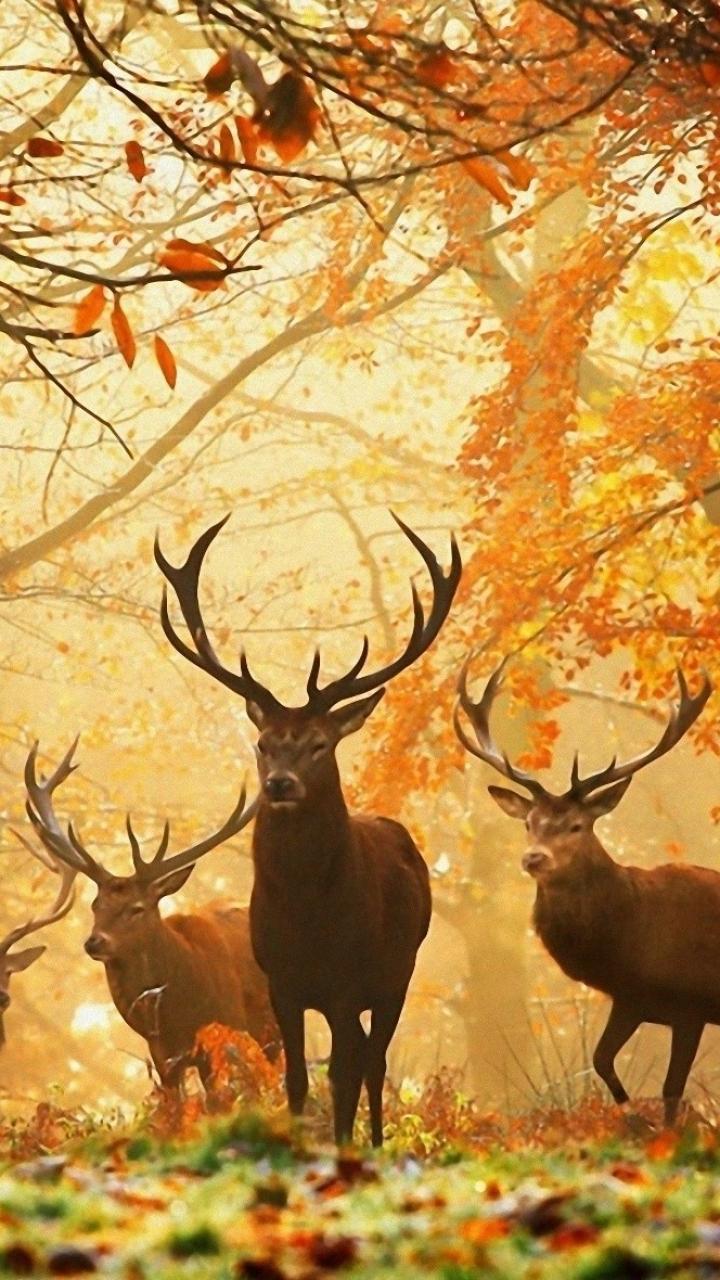 Обои на рабочий стол осень и олени