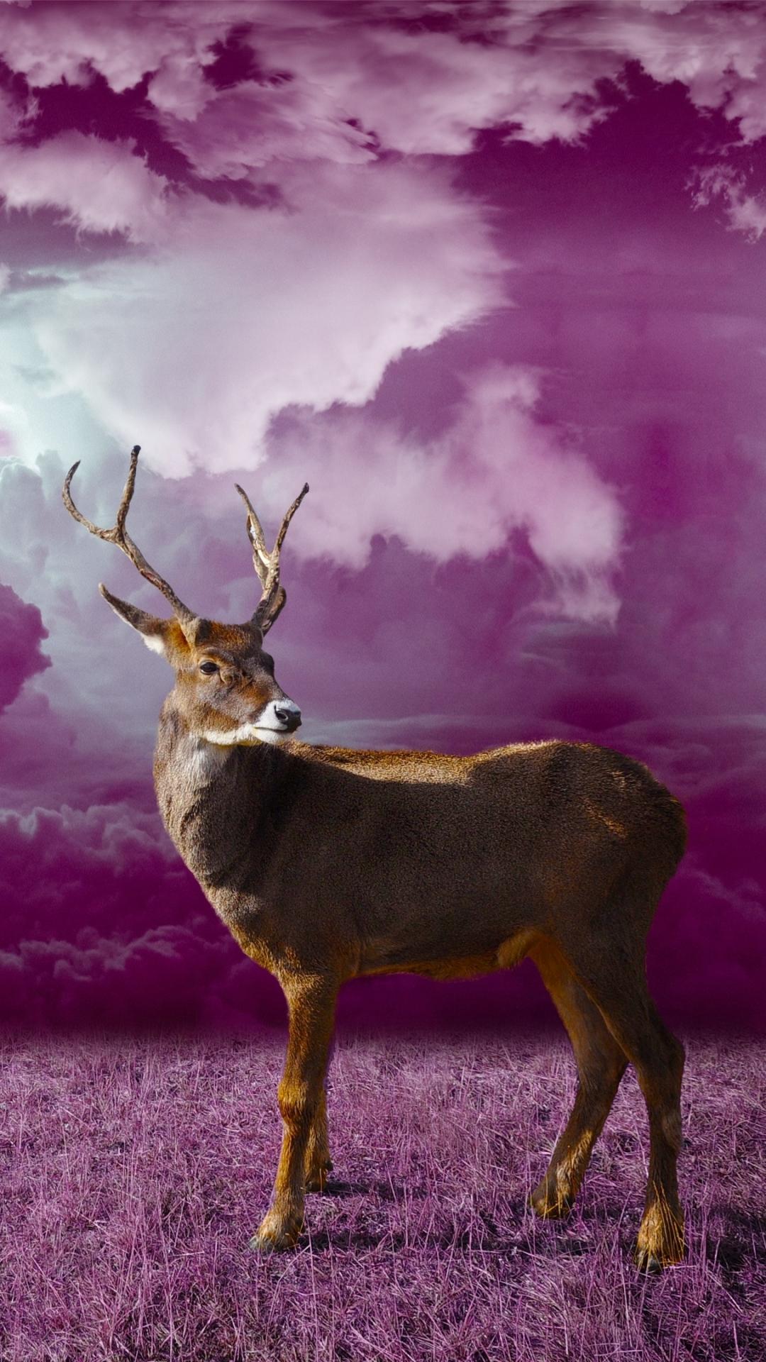 Animal Deer - Mobile Abyss