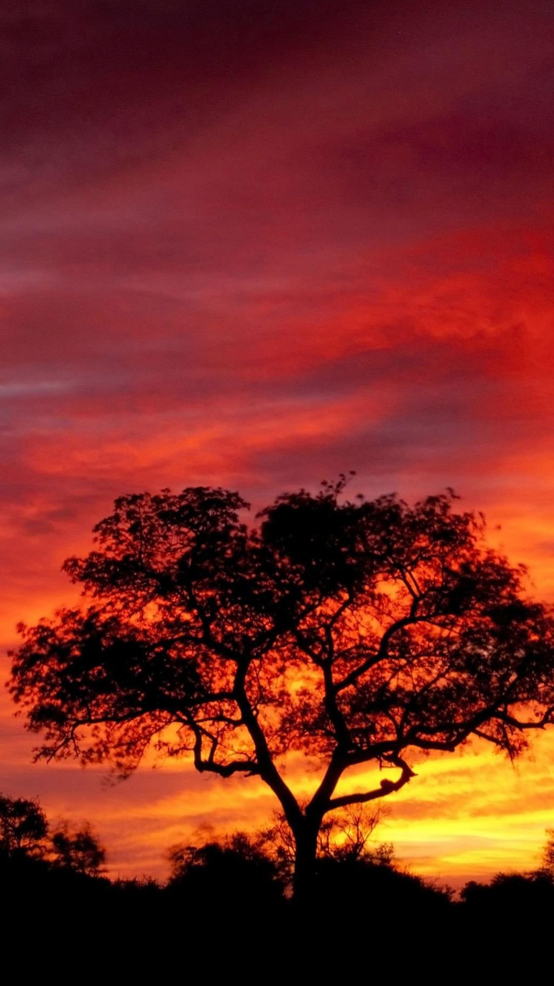 Earth Sunset 1080x1920 Wallpaper ID 621698