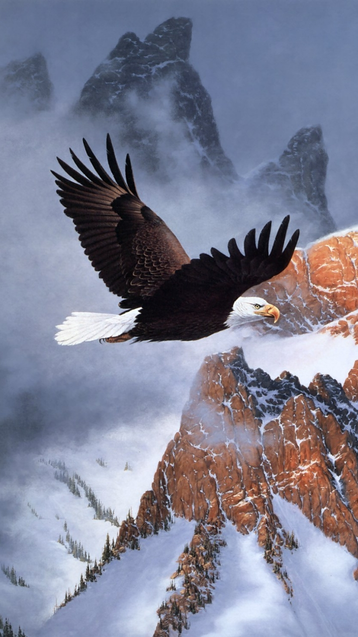 animal/bald eagle (720x1280) wallpaper id: 633370 - mobile abyss