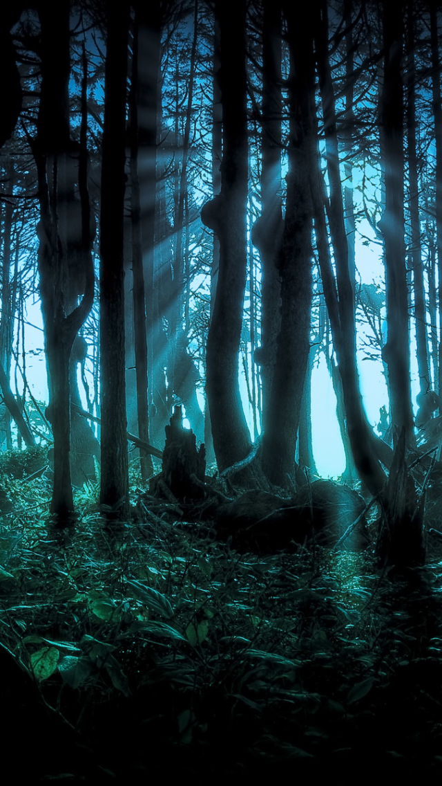 Dark Forest 640x1136 Wallpaper Id 633758 Mobile Abyss