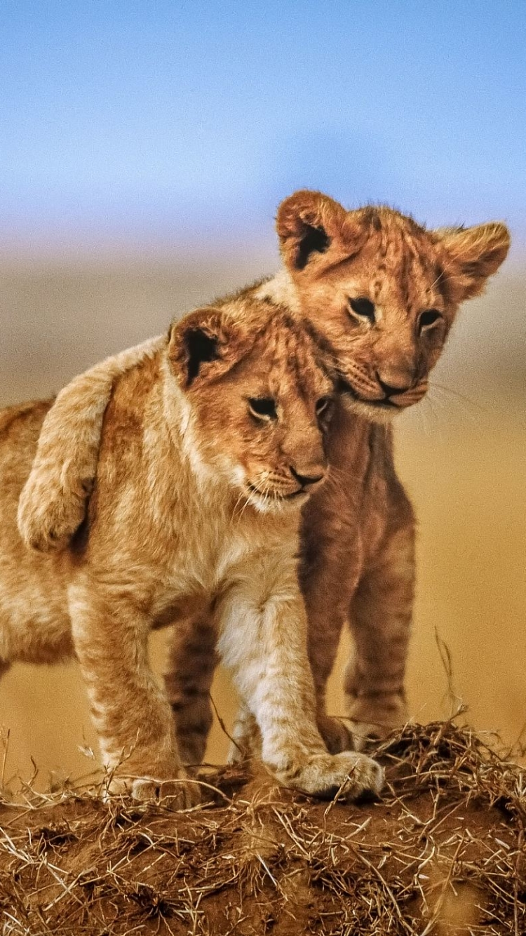 Great Wallpaper Mobile Lion - 634200  Picture_419950.jpg