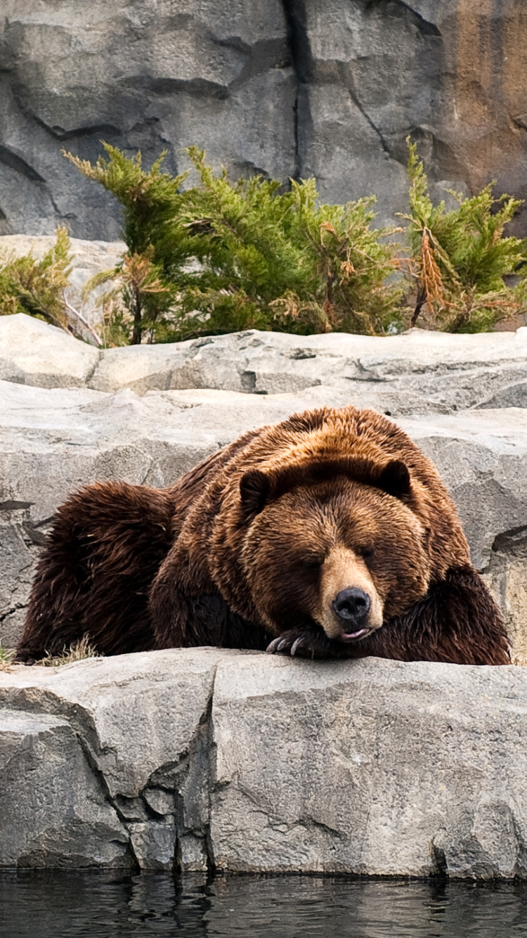 Animal Bear 750x1334 Wallpaper Id 638283 Mobile Abyss