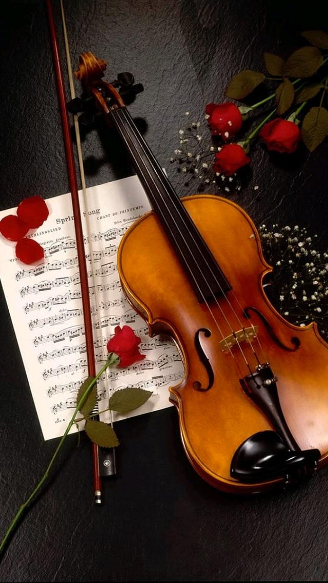 rose flower download wallpaper