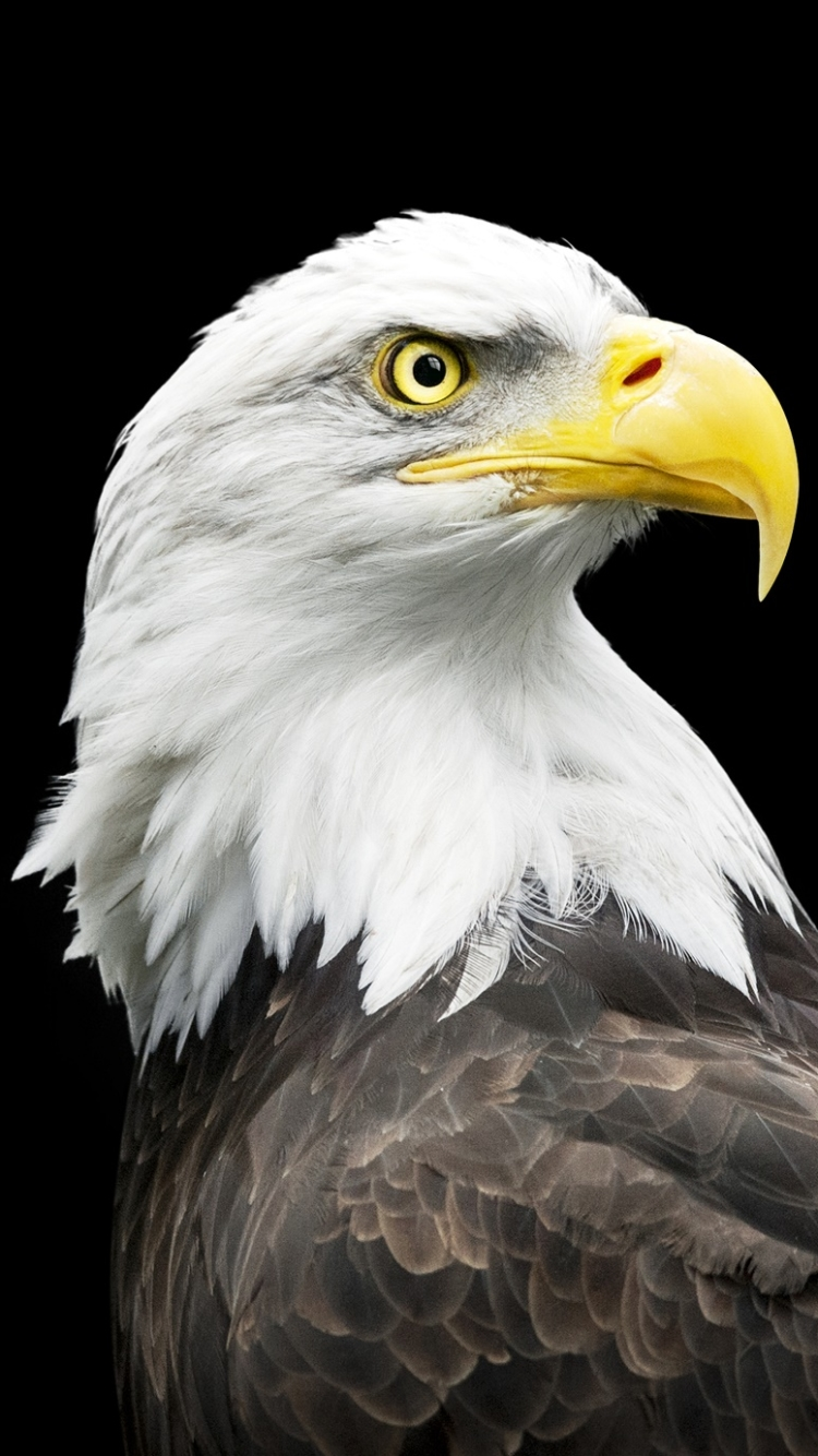 bird iphone wallpaper
