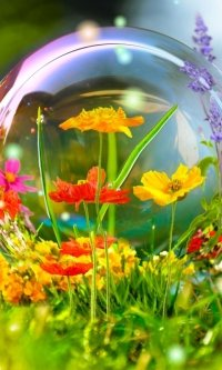 Mobile Wallpaper 643202