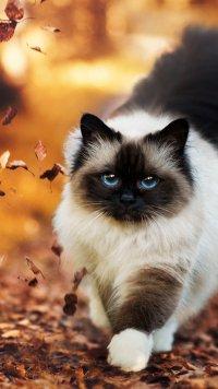 1028 Cat Samsung Galaxy J7 720x1280 Wallpapers