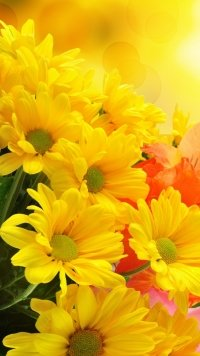 58 Yellow Flower 720x1280 Wallpapers