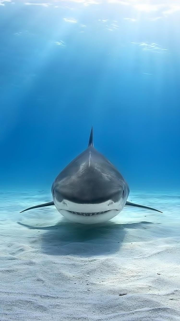 iPhone 7 AnimalShark Wallpaper ID 667038