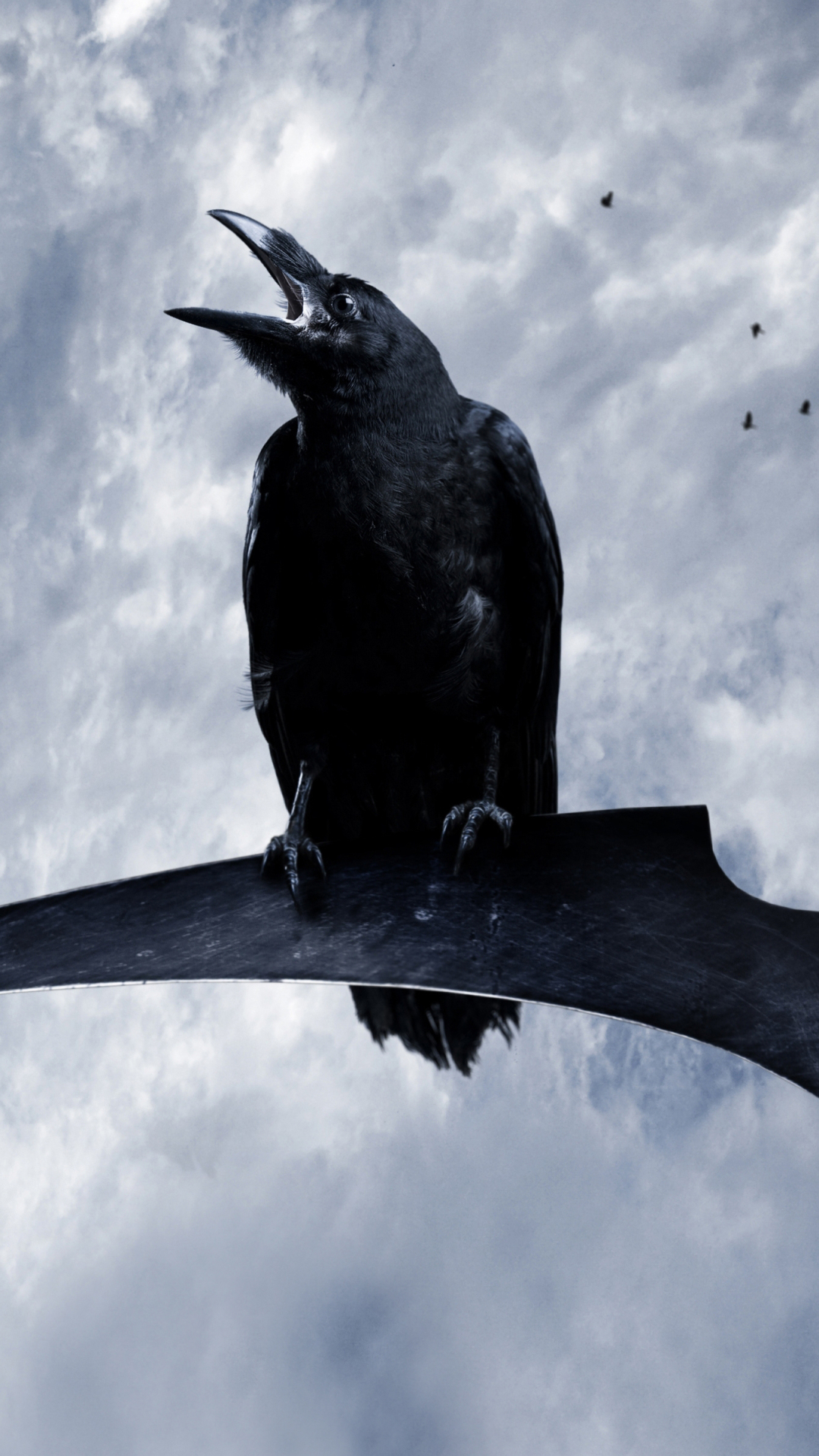 Animal Crow 1080x1920 Wallpaper ID 668274