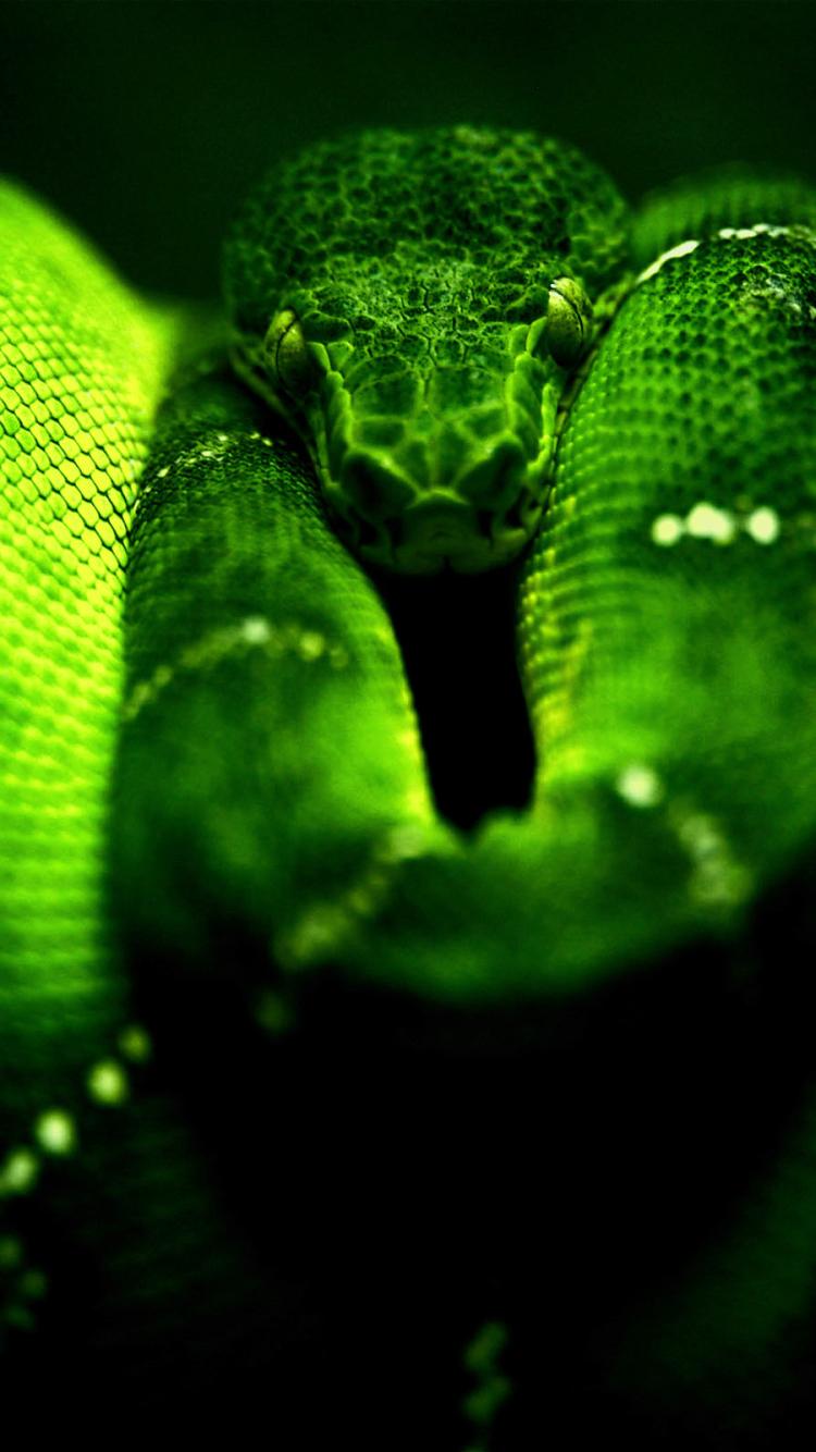 snake wallpaper download