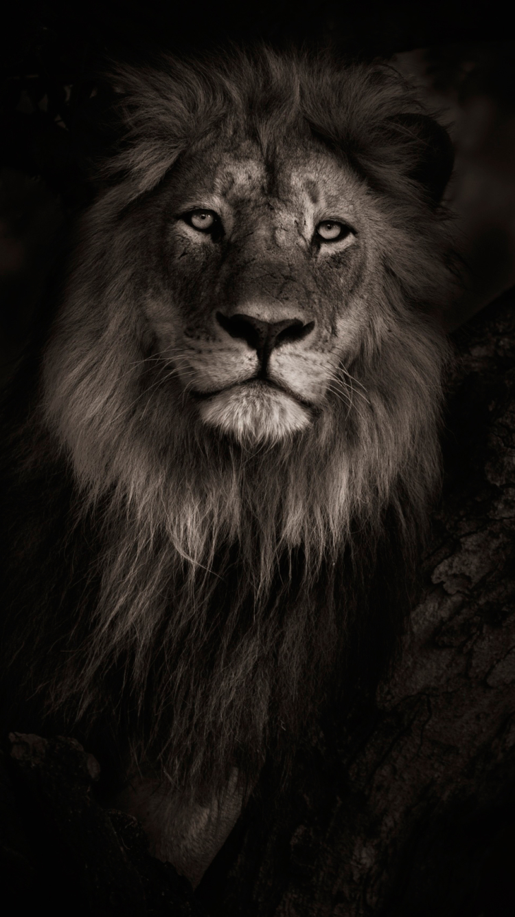Lion Iphone 5 Wallpaper My Sims 3 Downloads