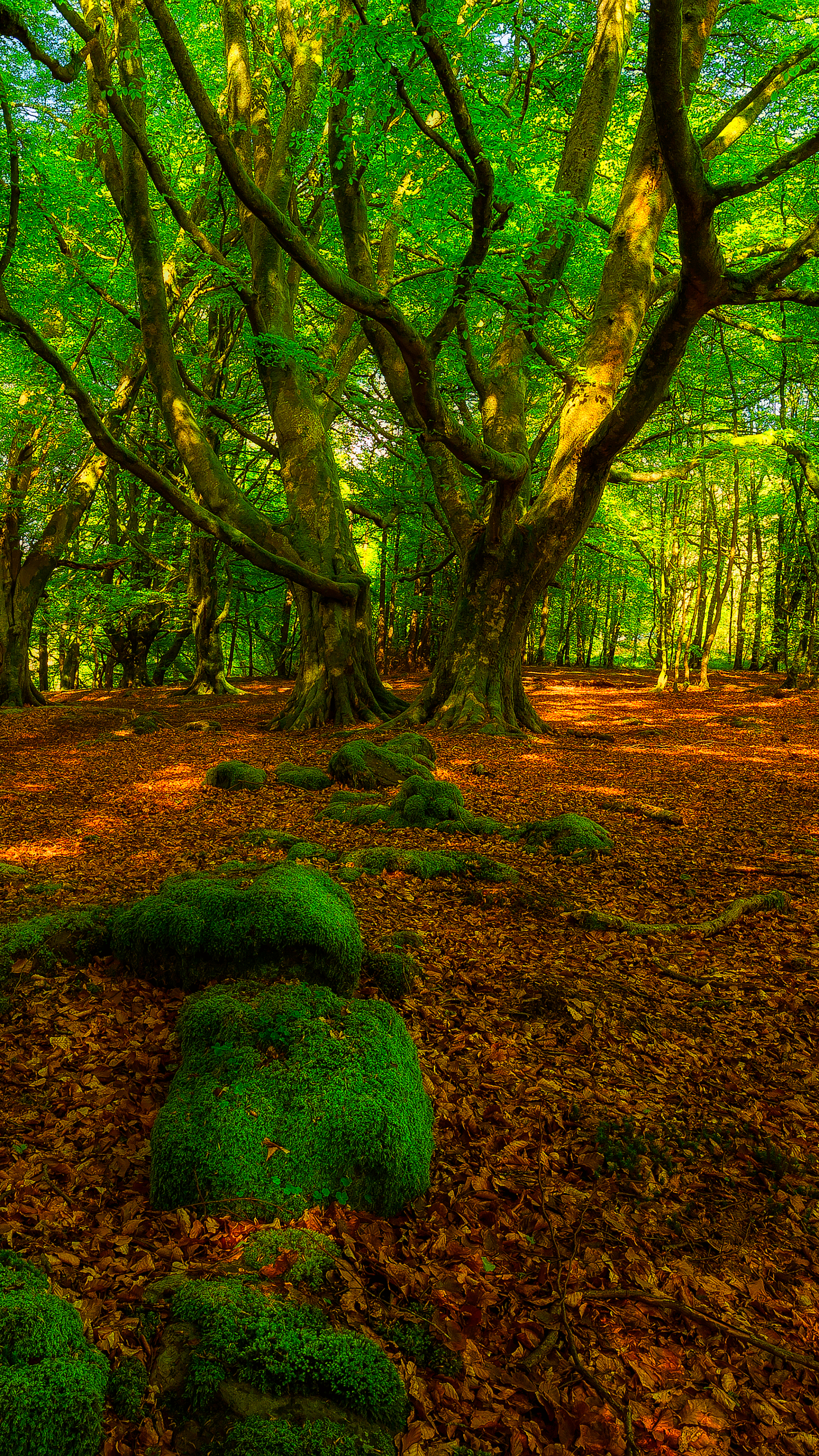 Earth Forest 1080x1920 Wallpaper ID 692324