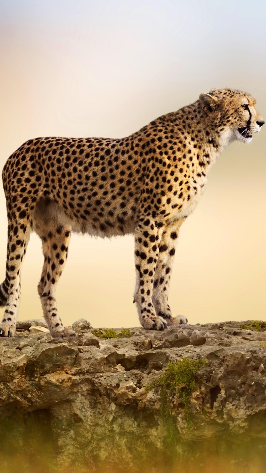 iPhone 8 Plus Animal Cheetah Wallpaper ID