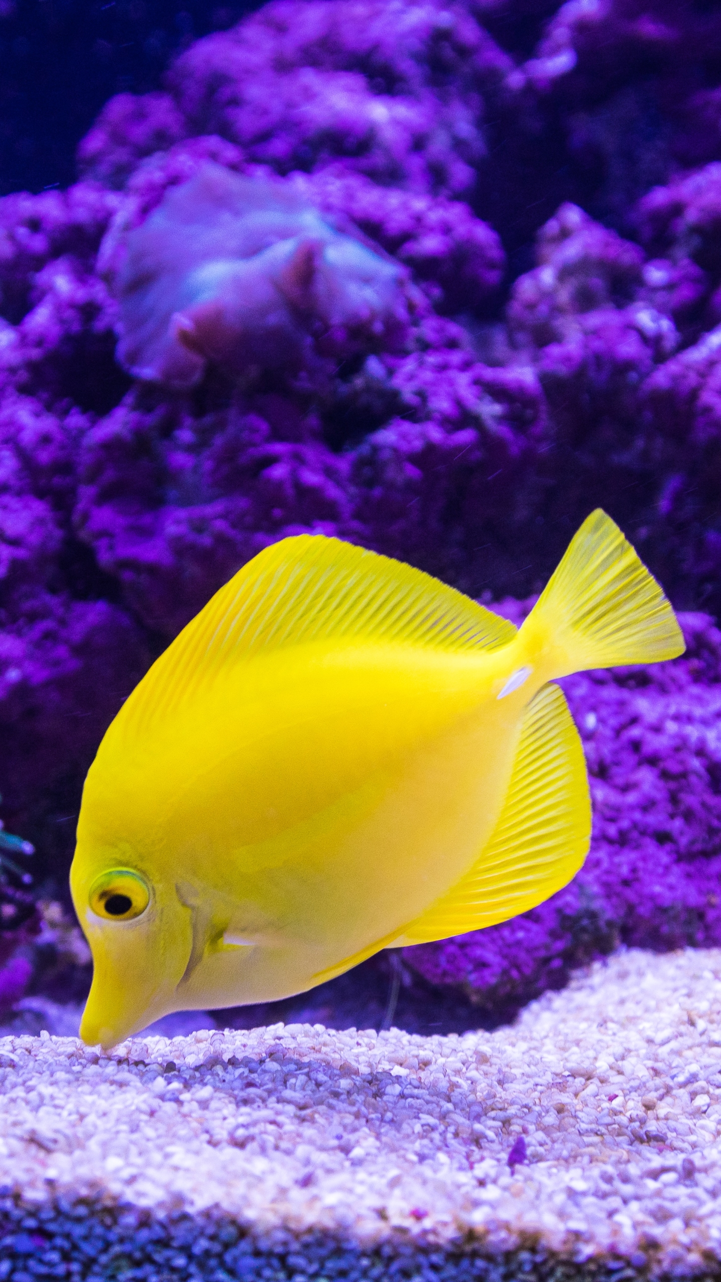 Animal Tropical Fish 1440x2560 Wallpaper Id 696833 Mobile Abyss