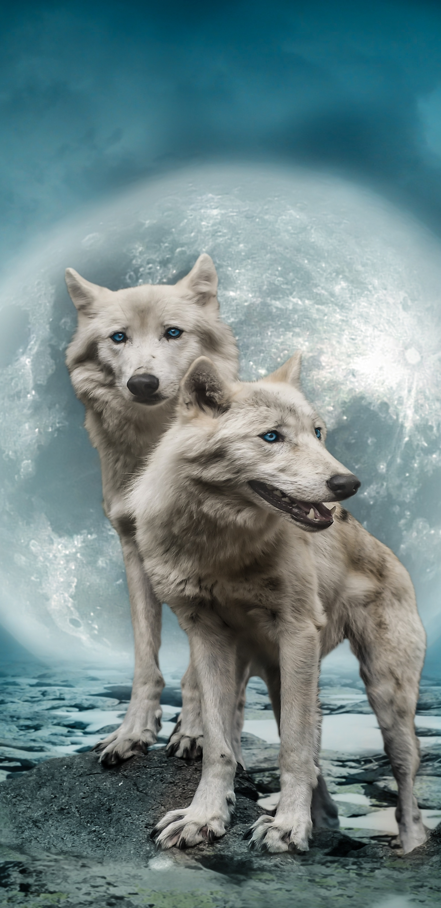 Animal Wolf 1440x2960 Wallpaper Id 729554 Mobile Abyss