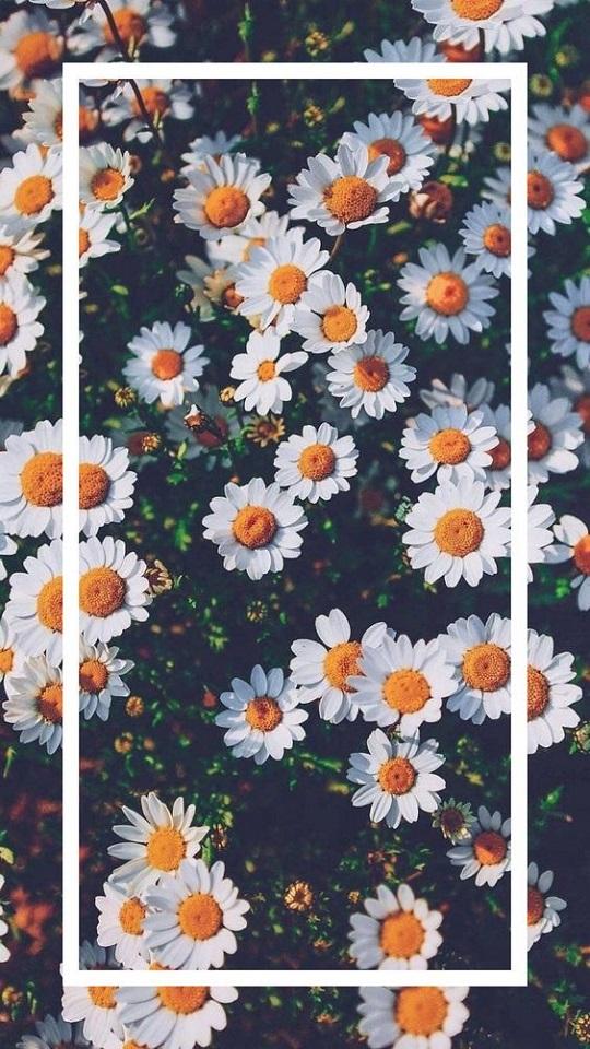 Wallpaper 760036