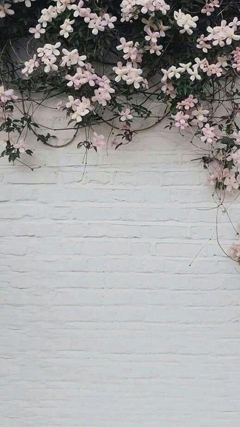 Wallpaper 760041