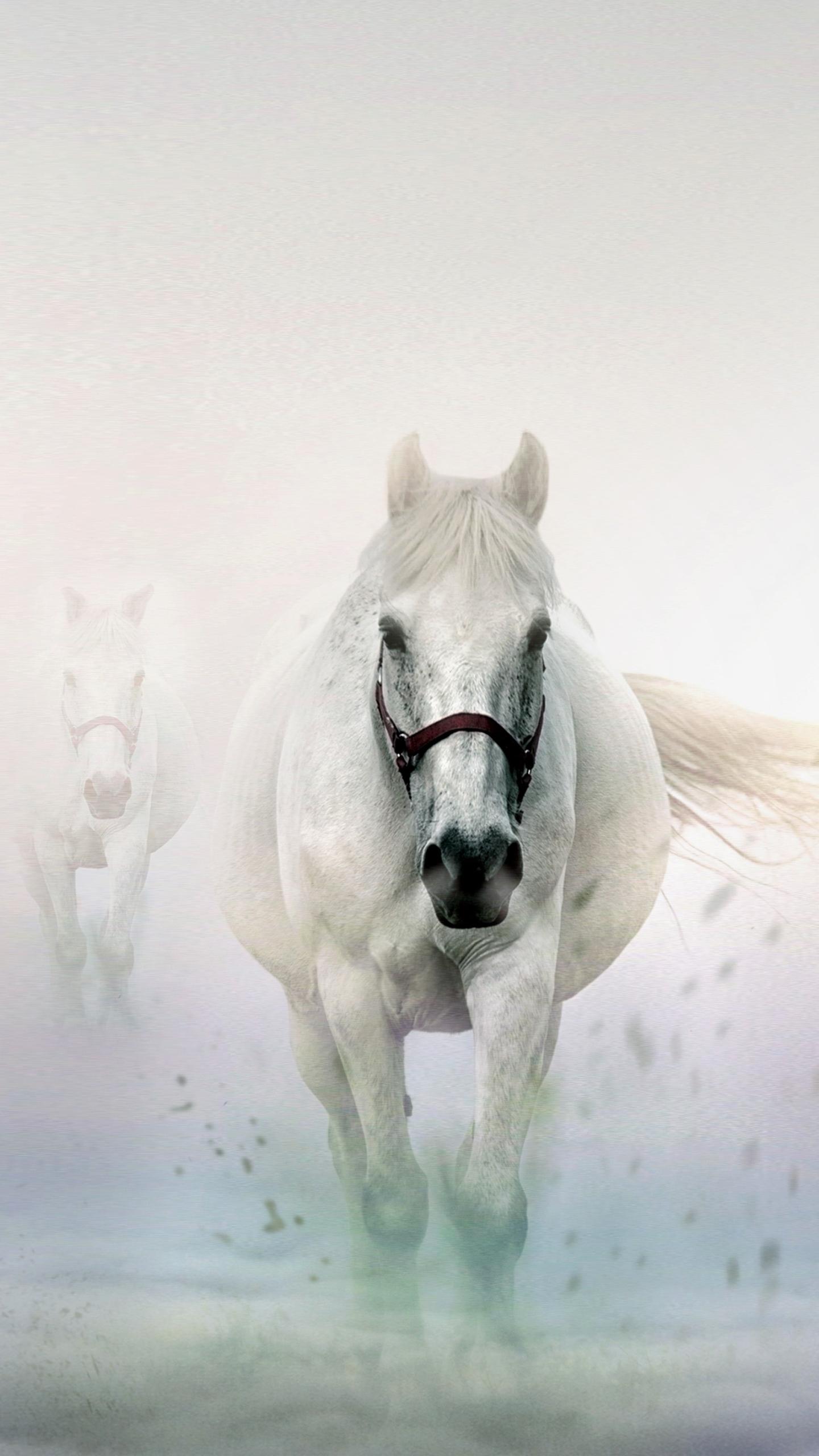 White Horse Wallpaper For Mobile White Wallpaper