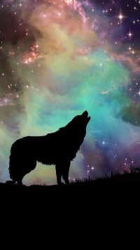 144 Wolf Appleiphone 7 Plus 1080x1920 Wallpapers Mobile