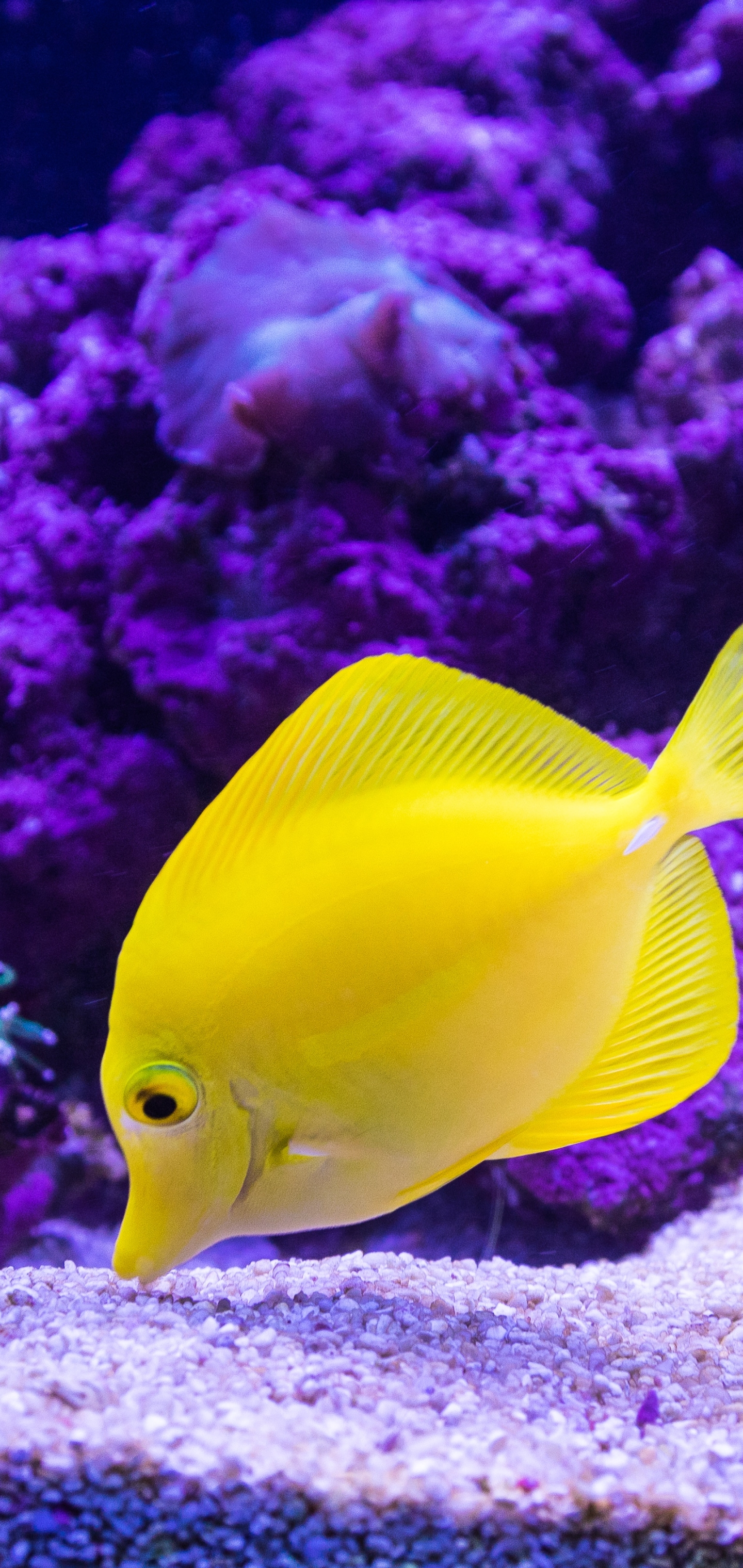 Animal Tropical Fish 1440x3040 Wallpaper Id 789953 Mobile Abyss
