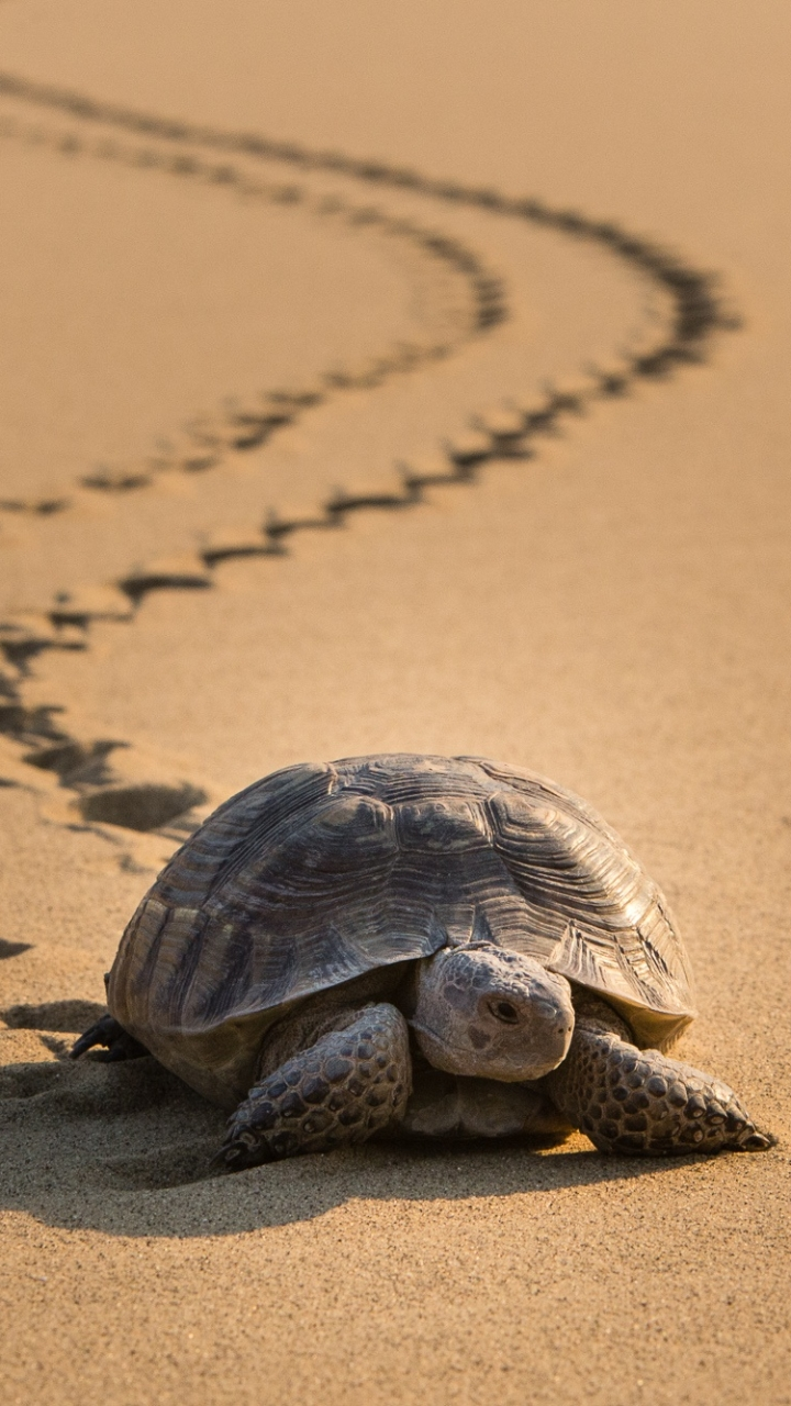 Animal Turtle 720x1280 Wallpaper Id 797227 Mobile Abyss